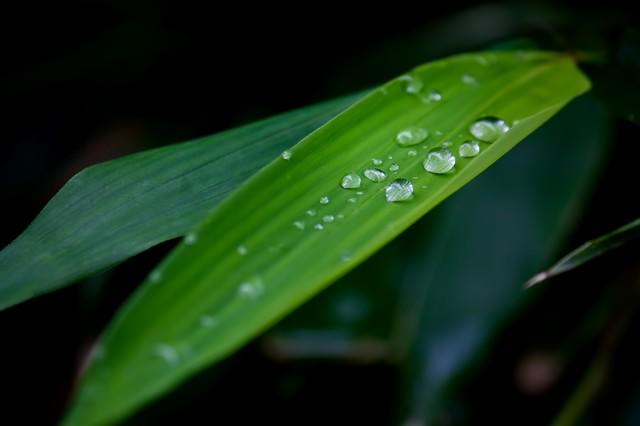 水滴がついた笹の葉の写真
