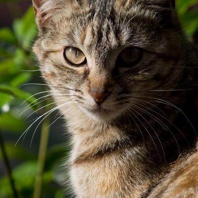 「正面を向き厳しい表情の猫」の写真素材