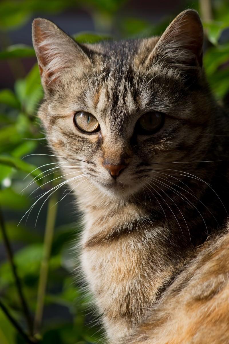 「正面を向き厳しい表情の猫」の写真