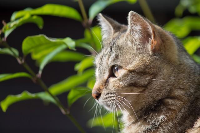 遠くを見つめる猫の写真