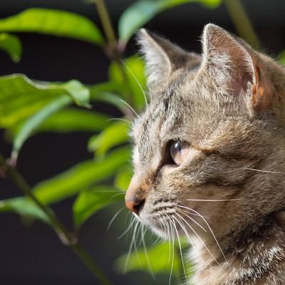 「遠くを見つめる猫」の写真素材