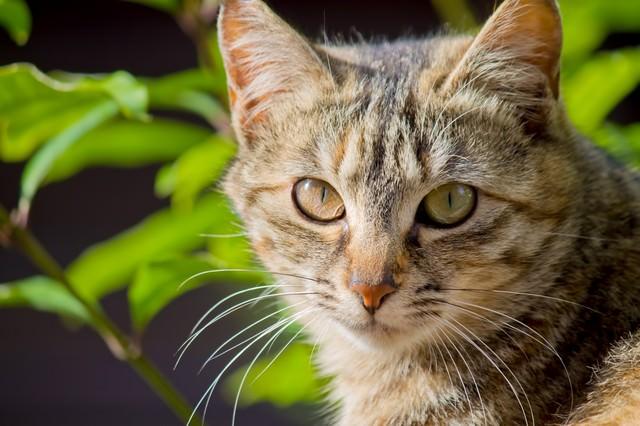 こちらを見つめる猫の写真