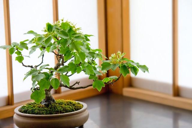 障子の前のかわいい盆栽の写真