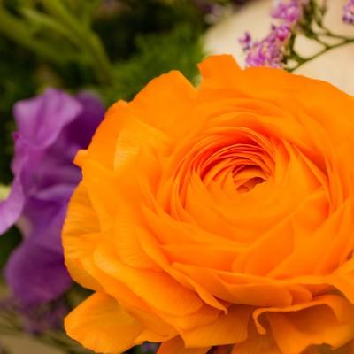 「オレンジのラナンキュラス」の写真素材