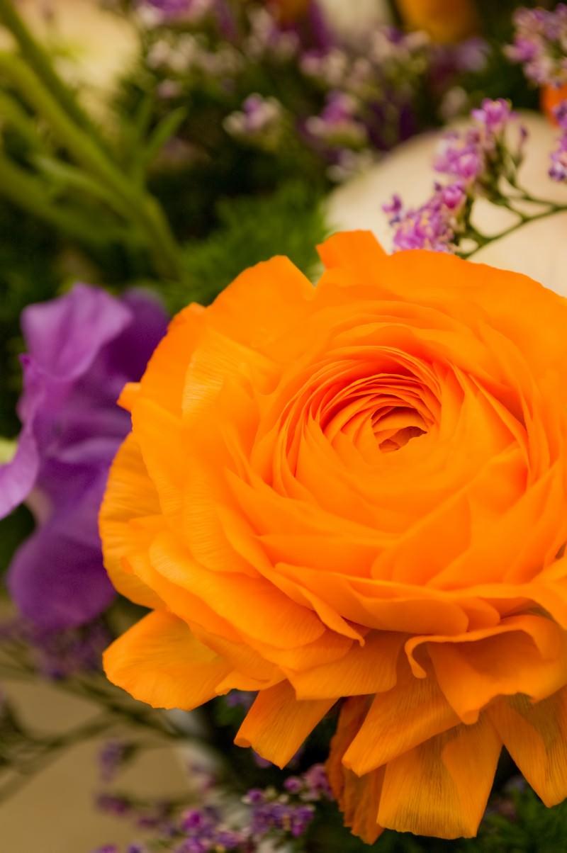 「オレンジのラナンキュラス」の写真