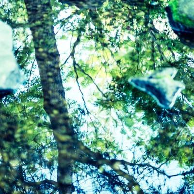 「反射する木々」の写真素材