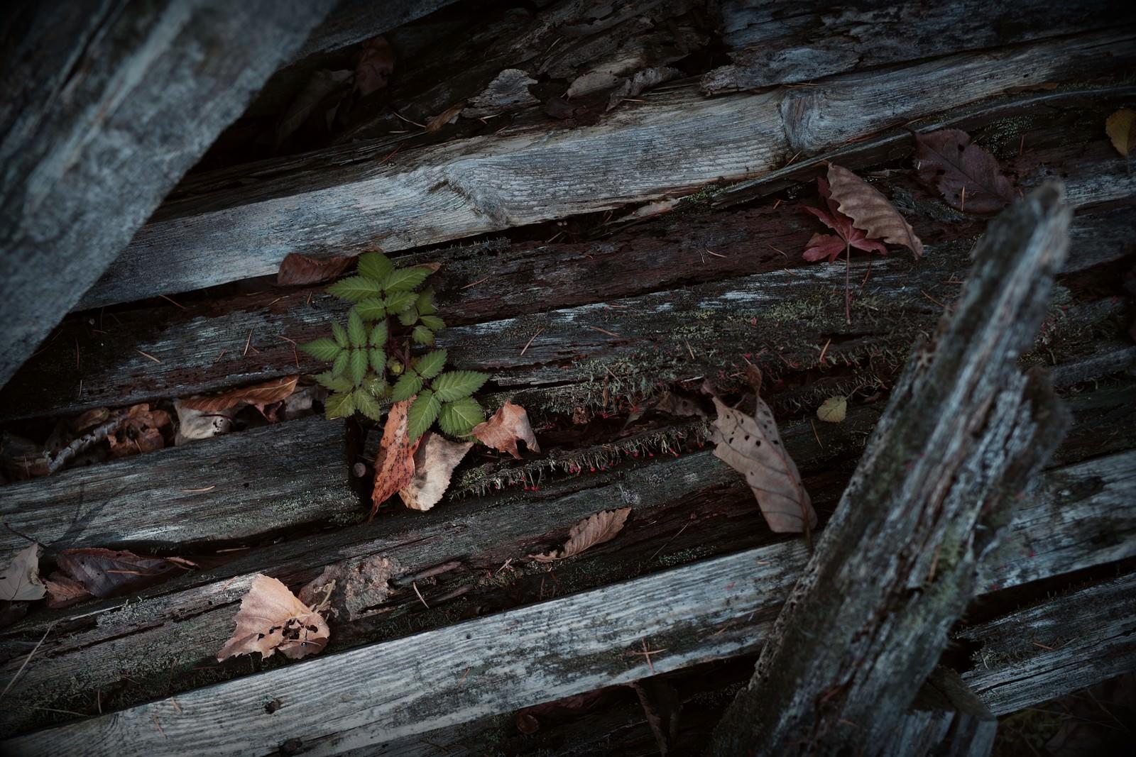 「乱雑に置かれた廃材とじめじめした箇所から生えるきのこ」の写真