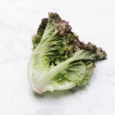 「サニーレタス(食材)」の写真素材