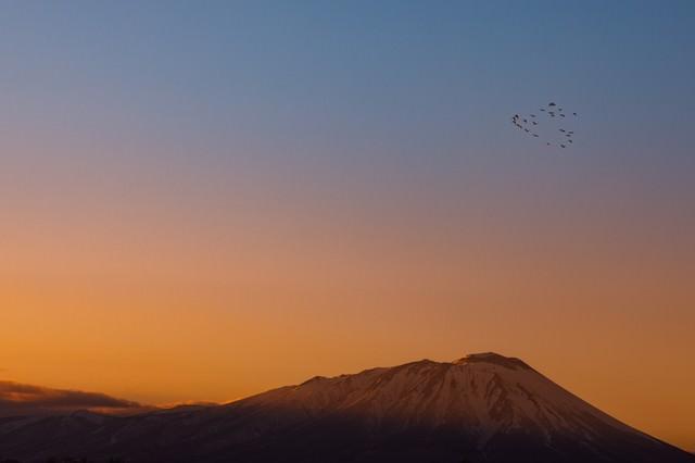 岩手山と渡り鳥の写真
