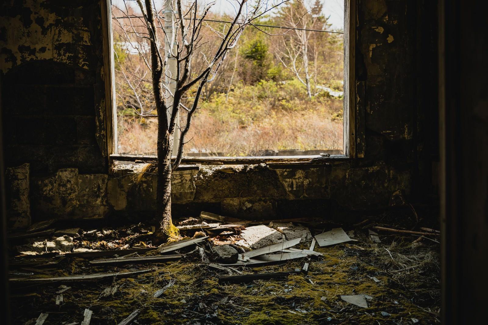 「廃宿舎の中で木が生える」の写真