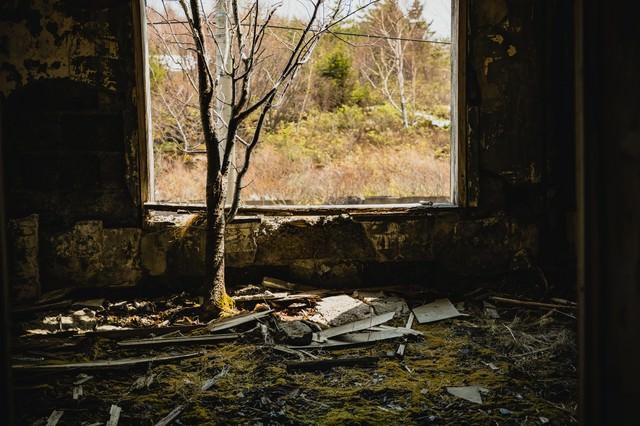 廃宿舎の中で木が生えるの写真