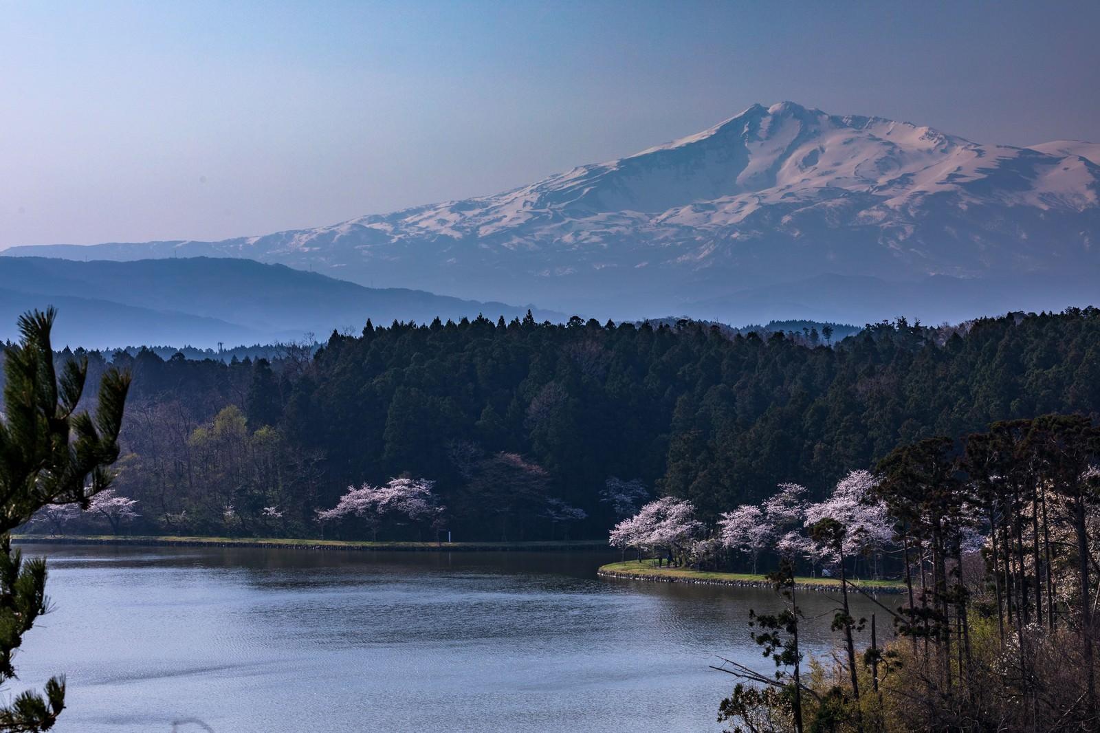 「鳥海山(ちょうかいさん)と桜」の写真