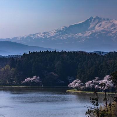 鳥海山(ちょうかいさん)と桜の写真