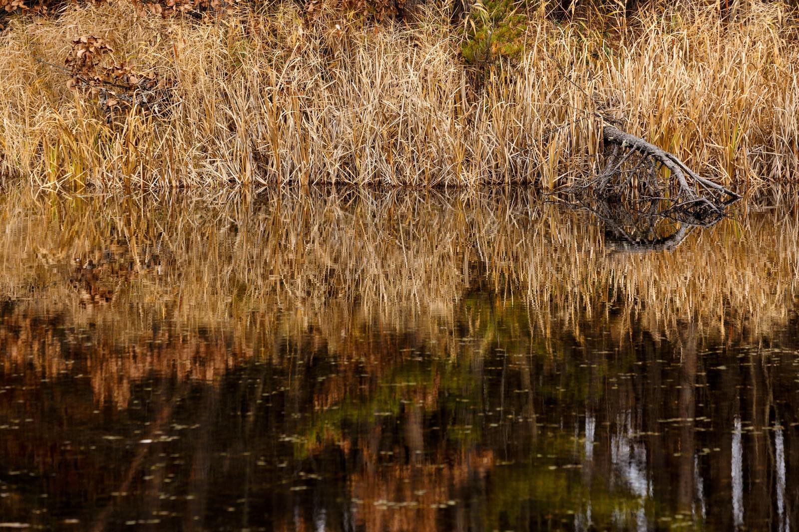 「枯れた草木と沼 | 写真の無料素材・フリー素材 - ぱくたそ」の写真