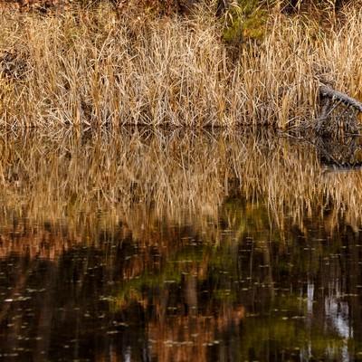 枯れた草木と沼の写真