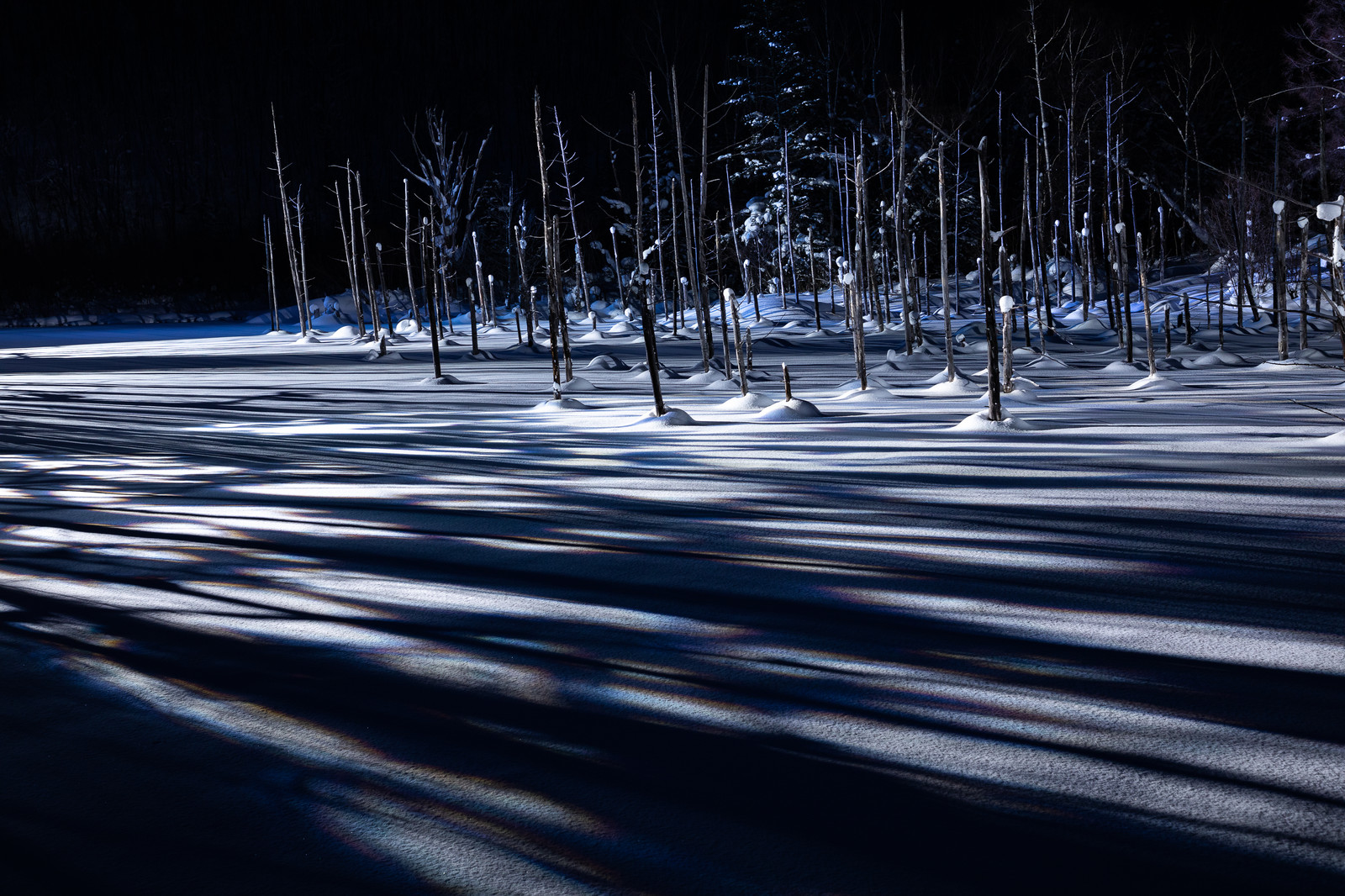 「雪積もる青い池と伸びる影」の写真