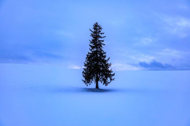 雪原に立つ孤独な木の写真