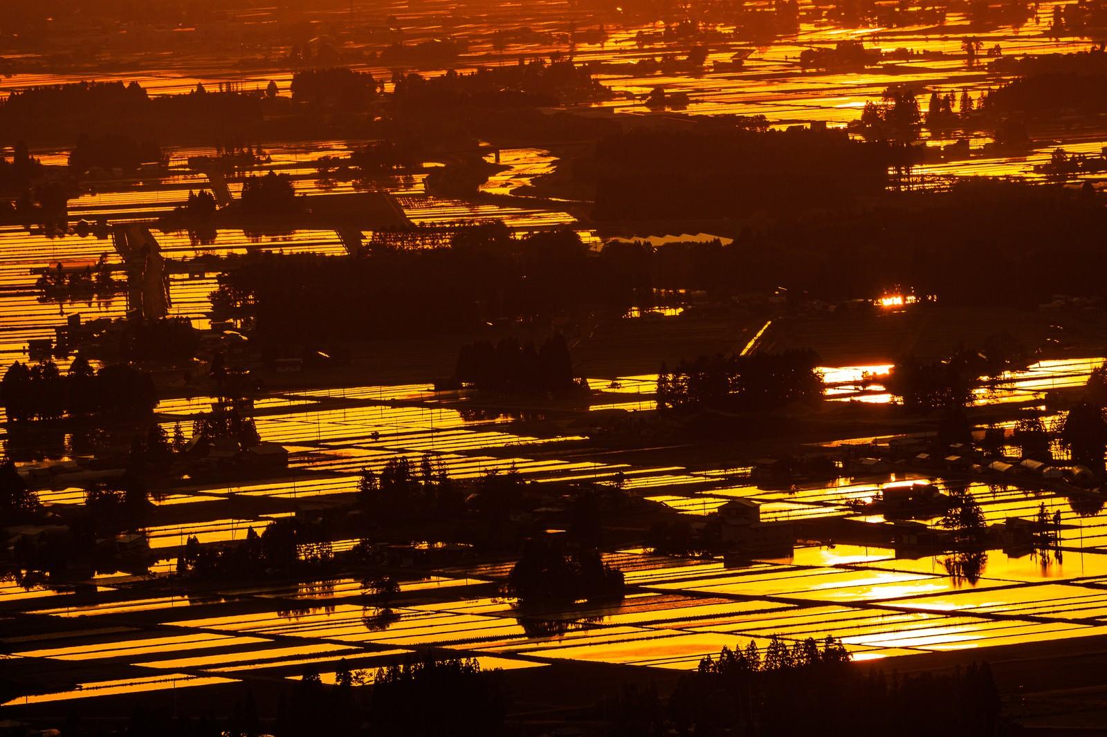 「黄金色に染まる田園」の写真