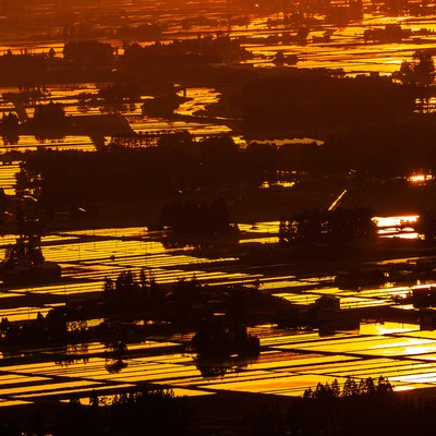 黄金色に染まる田園の写真