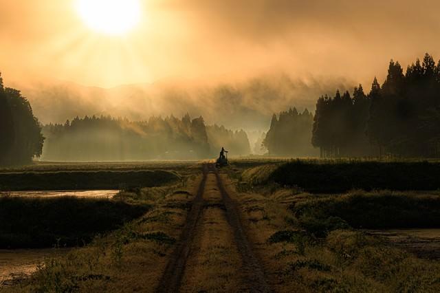 朝靄のあぜ道の写真