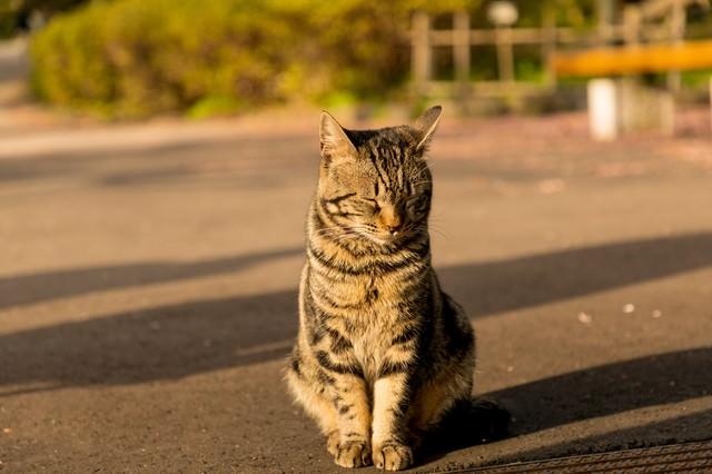ネコと伸びる影の写真
