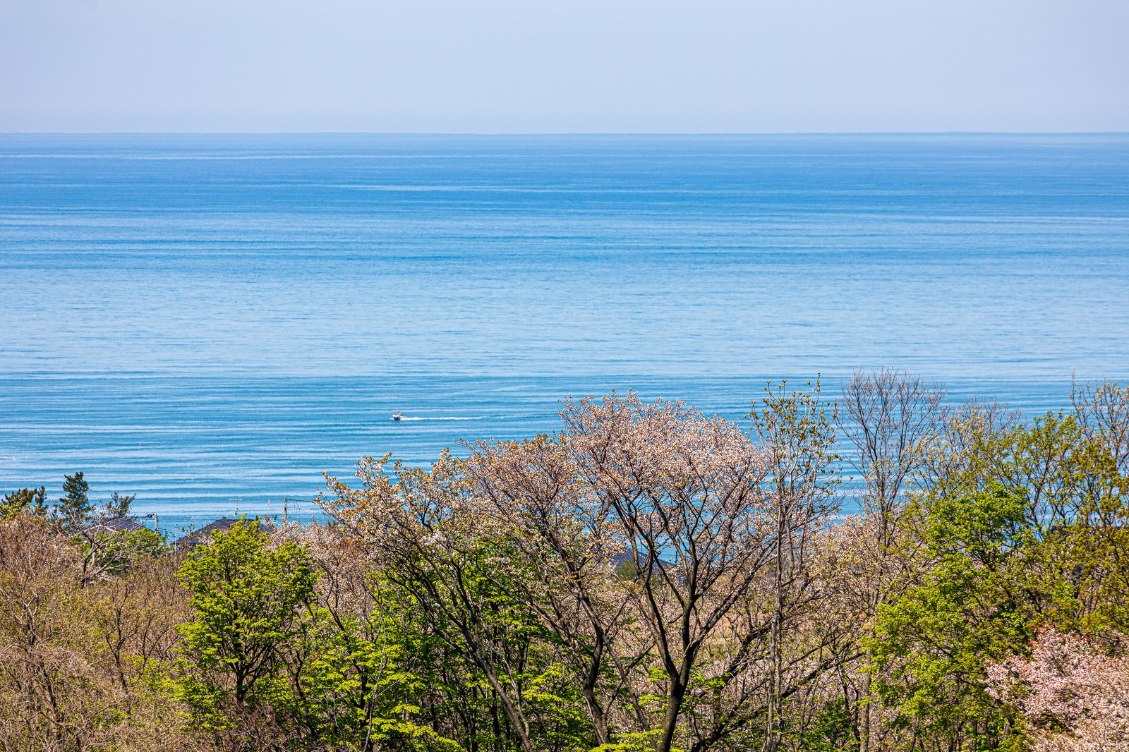 「高台から見下ろす静かな海」の写真