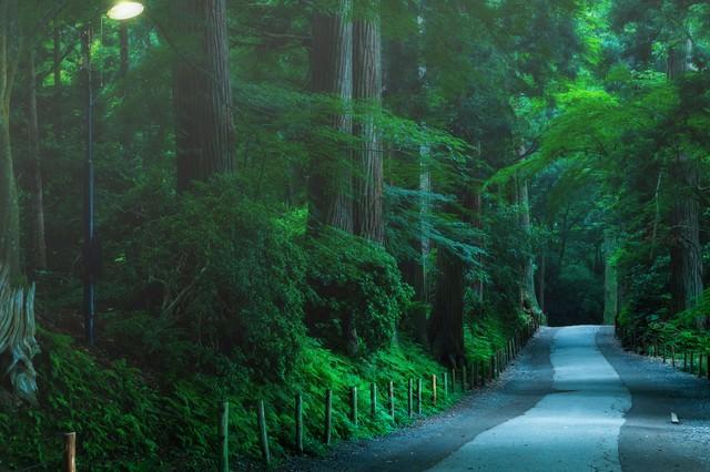 静寂に包まれる中尊寺参道の写真