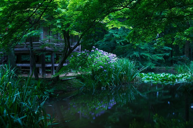 水鏡に映る中尊寺弁財天堂の写真