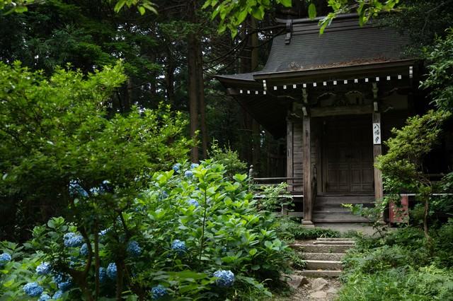 紫陽花と中尊寺八幡堂の写真