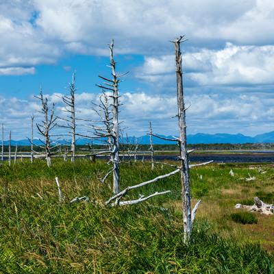 野付半島のトドワラの写真