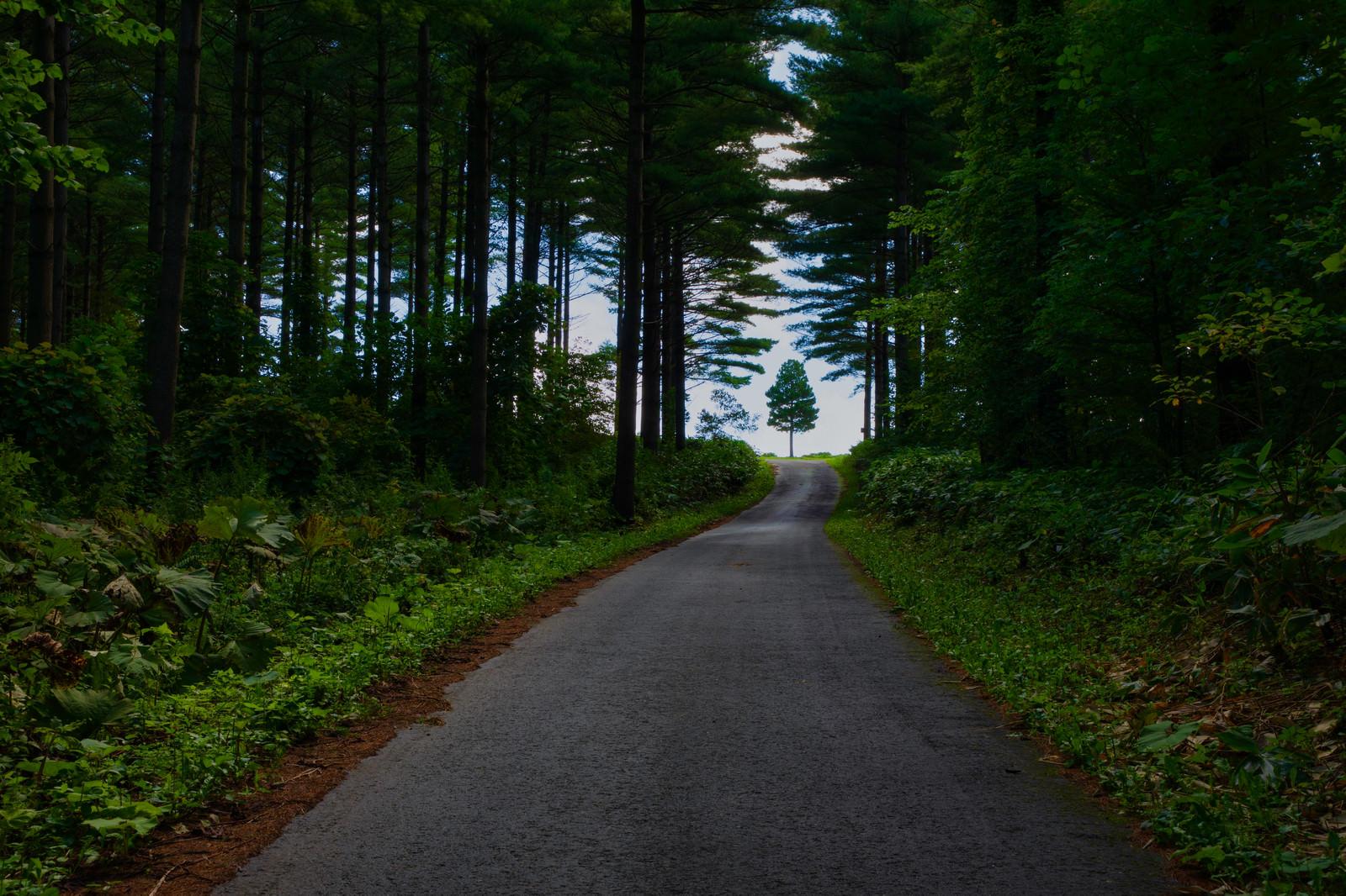 「森の一本道の先にある木」