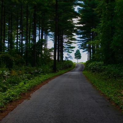 森の一本道の先にある木の写真