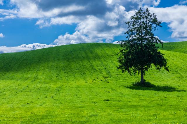 北の大地に立つ木の写真