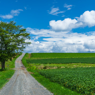 広大な大地の畑と一本道の写真