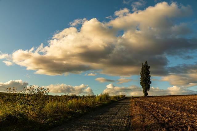 耕された畑に立つポプラの木と雲の写真