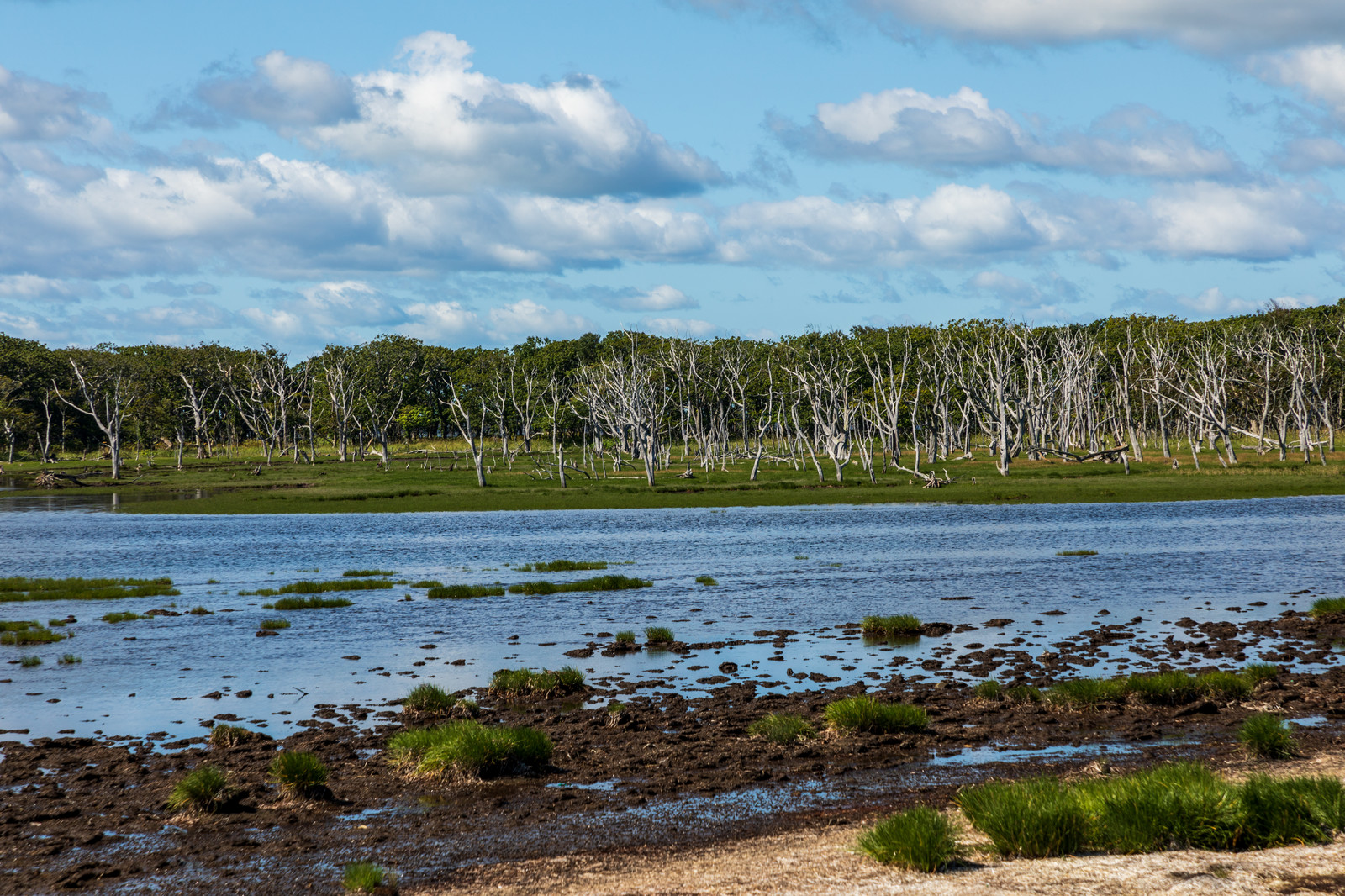 「野付半島のナラワラ」の写真