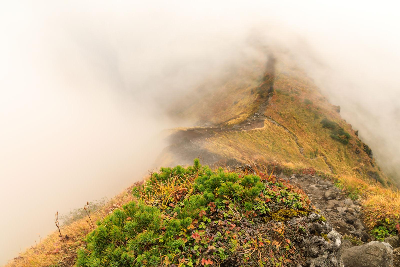 「霧に覆われる駒ケ岳の稜線」の写真