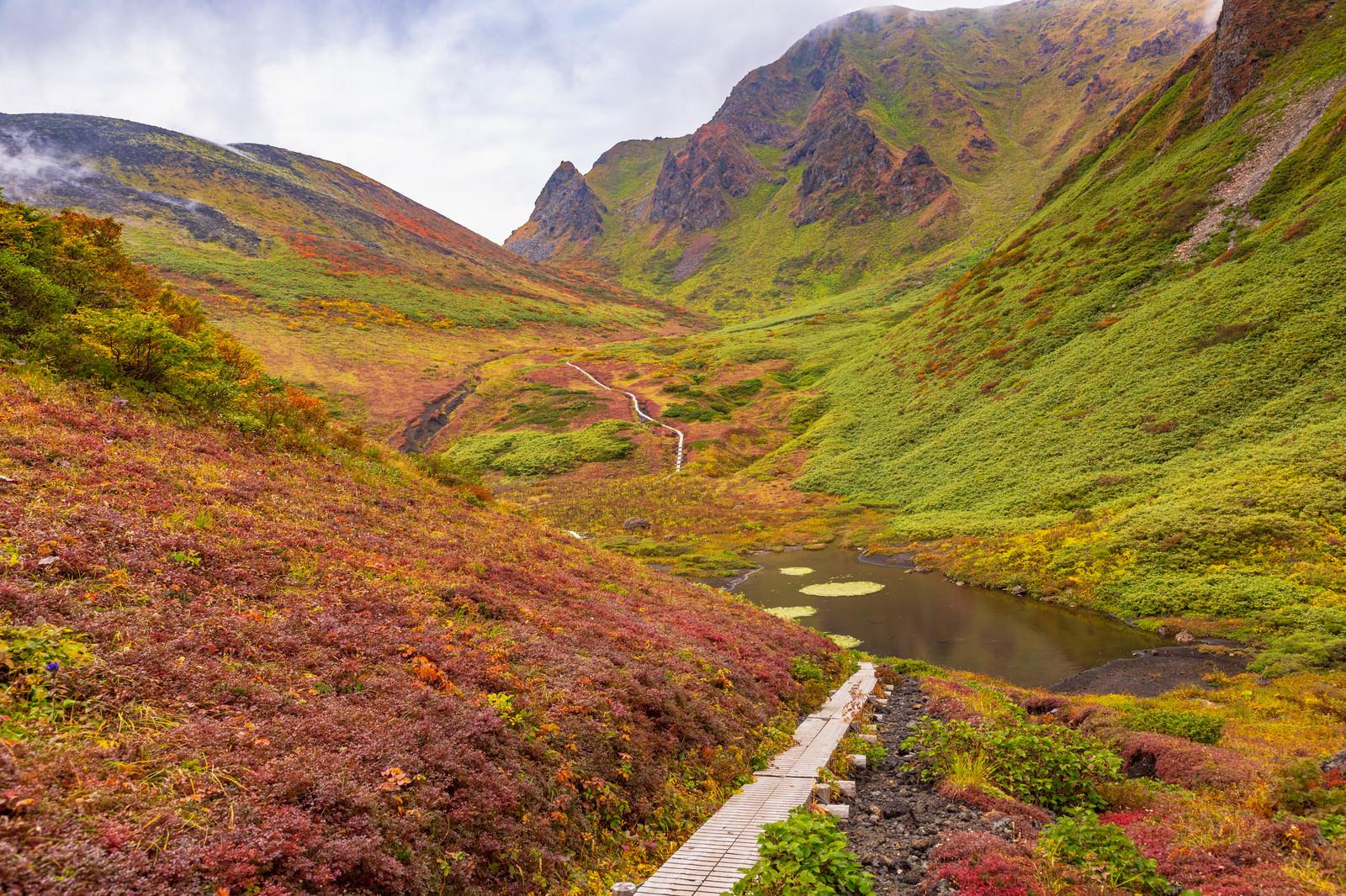 「ムーミン谷にある木道の登山道(駒ケ岳)」の写真