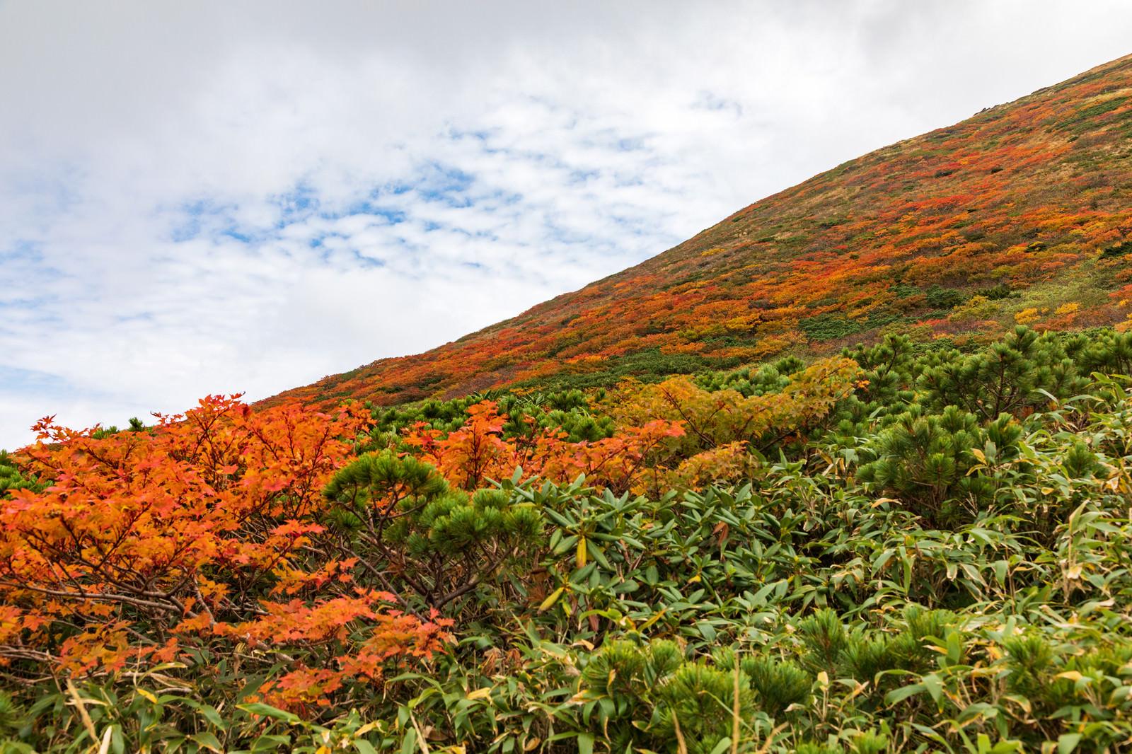 「紅葉し始める秋の秋田駒ケ岳」の写真
