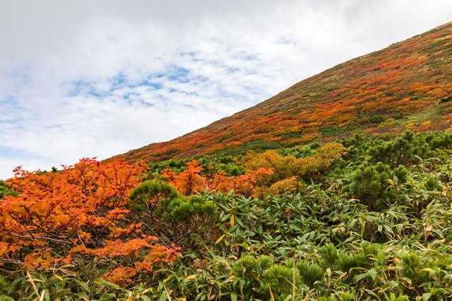 紅葉し始める秋の秋田駒ケ岳の写真