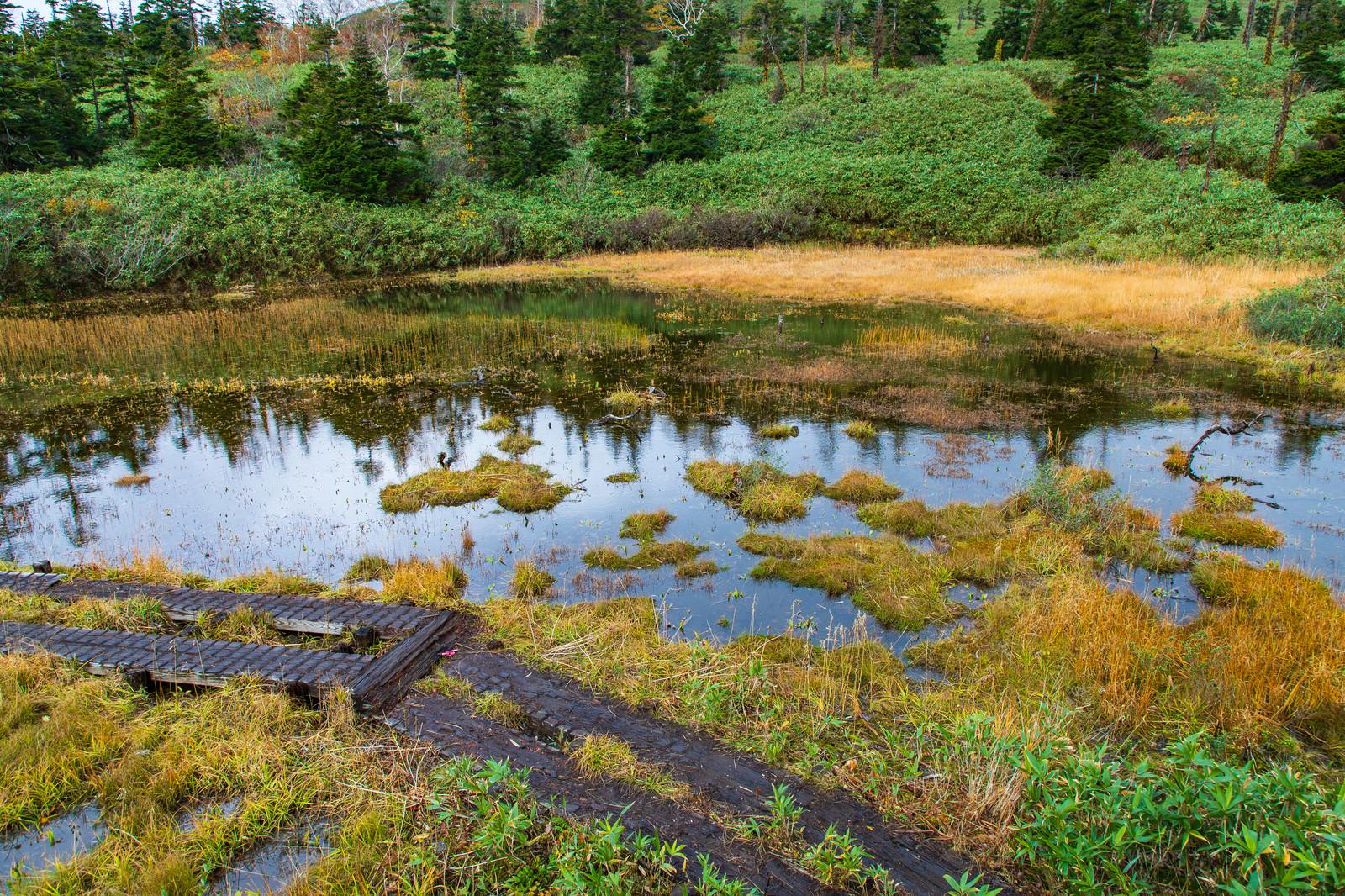 「八幡平三ツ石山荘前の湿原」の写真