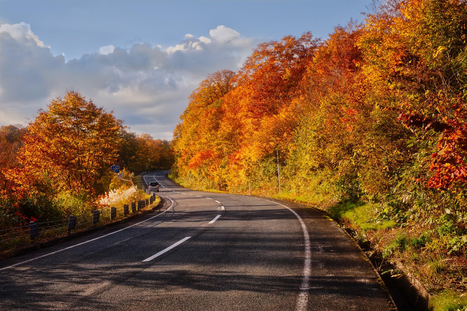 「栗駒山の紅葉で染まる道」の写真