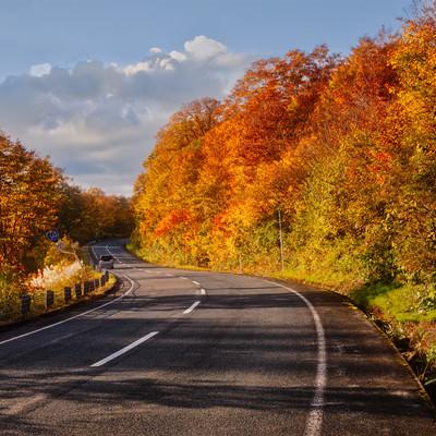 栗駒山の紅葉で染まる道の写真