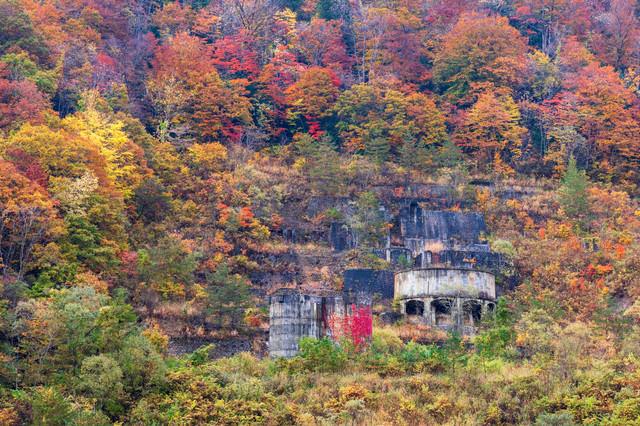 紅葉にまみれる廃墟(土畑鉱山跡)の写真