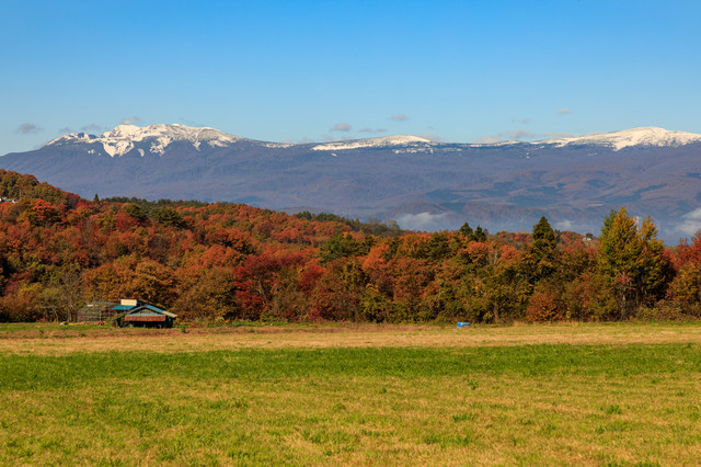草原から望む冠雪した八幡平と紅葉した山々の写真