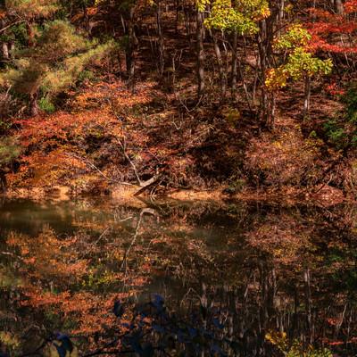沼の水面に反射する紅葉する木々の写真