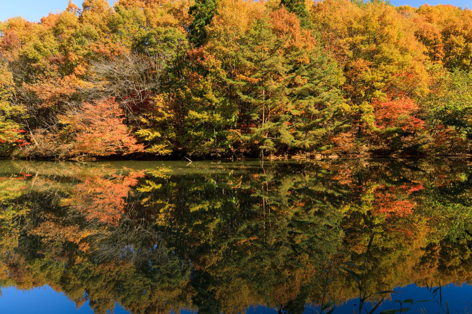「湖面に反射する紅葉した木々のリフレクション」の写真