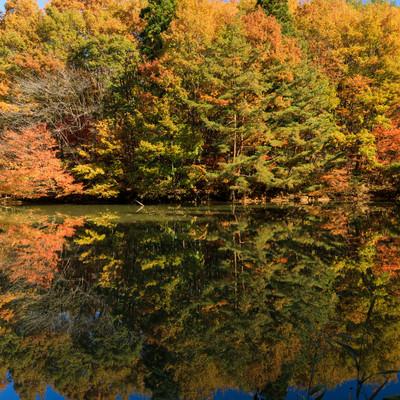 湖面に反射する紅葉した木々のリフレクションの写真