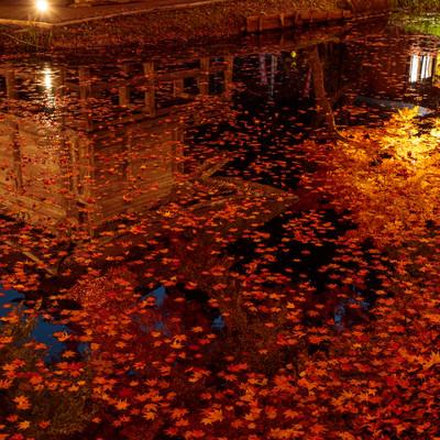 水面に映りこんだ中尊寺弁財天堂と落葉したもみじの写真