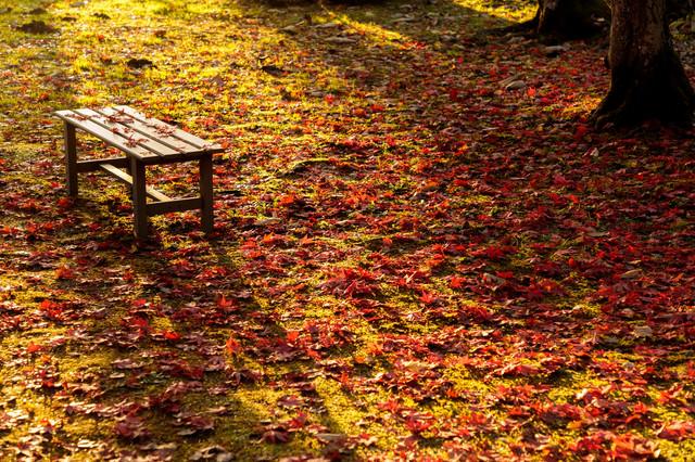 一面の落ち葉とベンチの写真